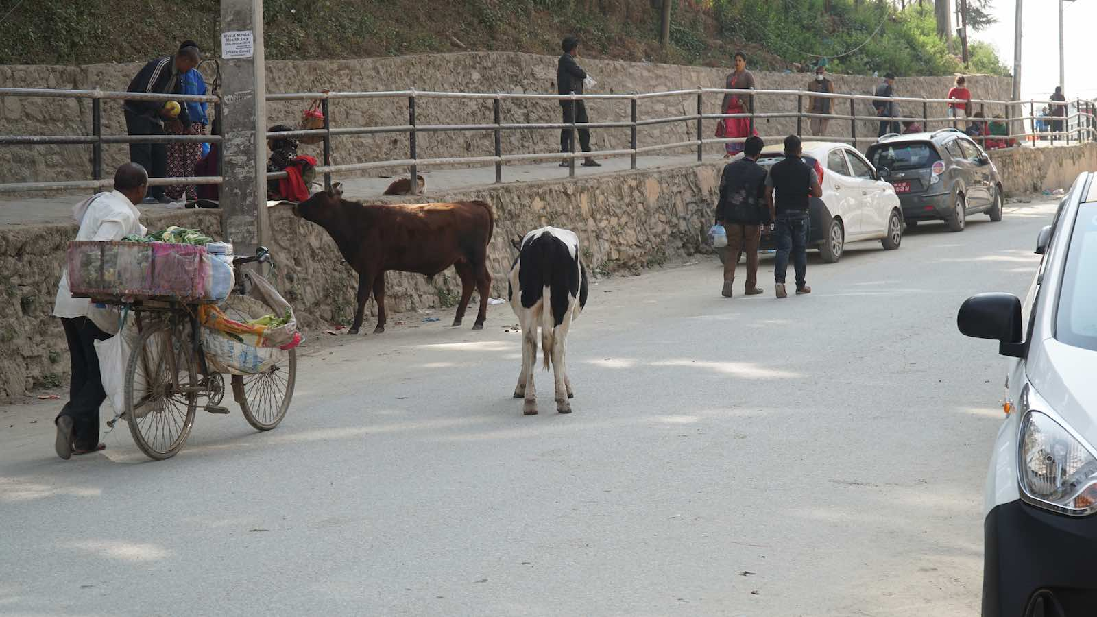 Street cows were also a common sight along the roads here.